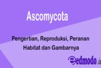 Ascomycota - Pengertian, Reproduksi, Peranan, Habitat dan Gambarnya