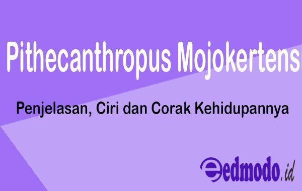 Pithecanthropus Mojokertensis - Sejarah, Ciri dan Cara Hidupnya
