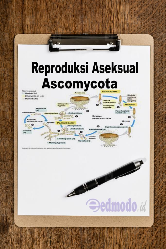 Reproduksi Aseksual