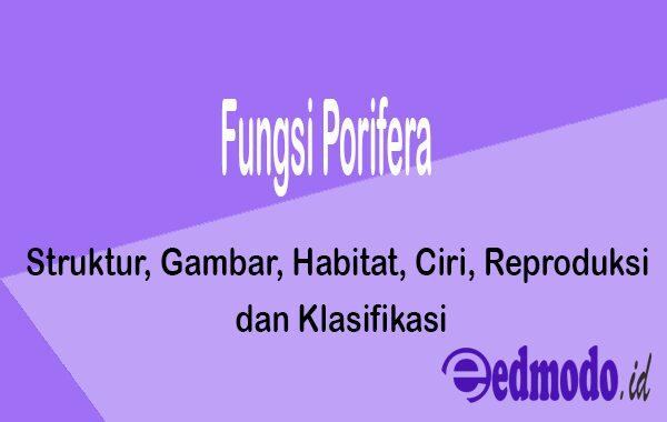 Fungsi Porifera - Struktur, Gambar, Habitat, Ciri, Reproduksi dan Klasifikasi