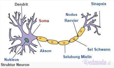 fungsi dari selubung mielin